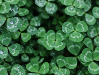 Truth Behind Luck